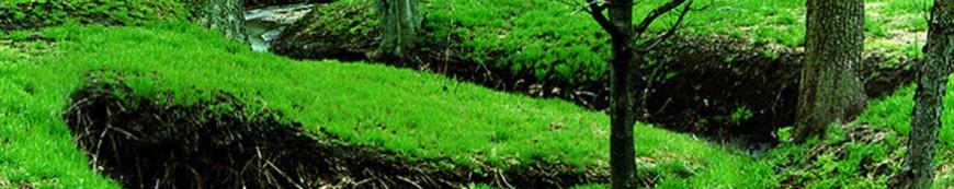 miškų tvarkymas
